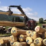 les_gites_du_Tilleul_Eco_Construction_fuste_rondins_02